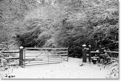 swing-gate-in-snow